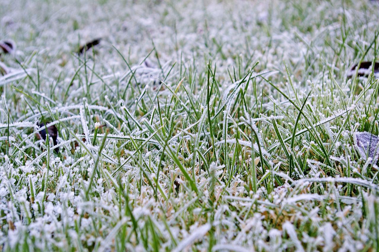 Jak zadbać o trawnik po zimie?