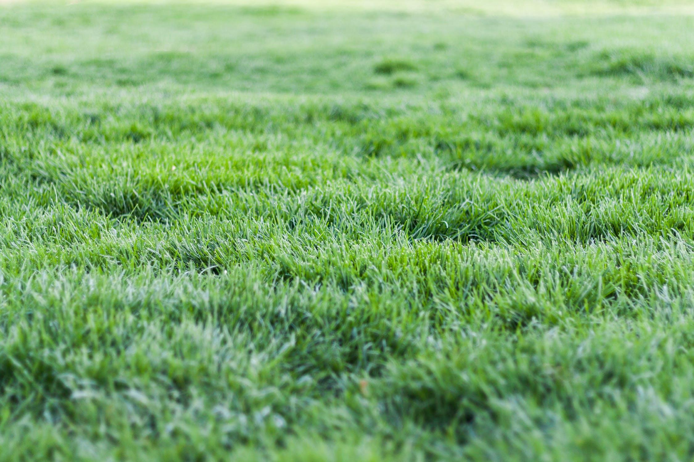 Opryskiwacze ogrodowe - jaki opryskiwacz będzie najlepszy do ogrodu